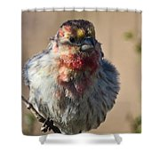 Rare Multicolored Male House Finch Shower Curtain