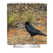 Raven, Grand Canyon Shower Curtain by Dawn Richards