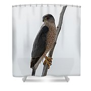 Ready To Pounce Shower Curtain