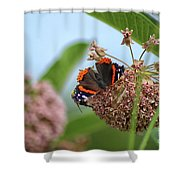 Red Admiral Butterfly On Milkweed Shower Curtain