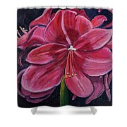 Red Amaryllis  Shower Curtain