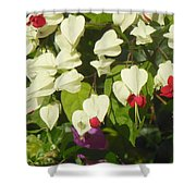 Red And White Surprise 2 Shower Curtain