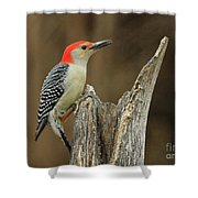 Red-belly At Stump Shower Curtain