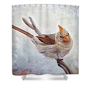 Red Bill Beauty Shower Curtain