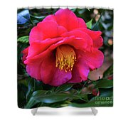 Red Camelia Shower Curtain