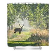 Red Deer In The Forest Shower Curtain