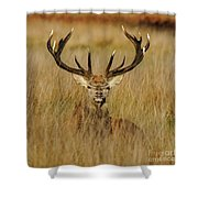Red Deer Portrait 2 Shower Curtain