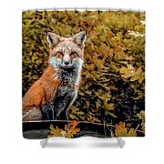 Red Fox In Fall Colors Shower Curtain