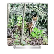 Red Fox In The Woods Shower Curtain
