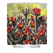 Red Hot Cholla  Shower Curtain