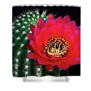 Red Hot Torch Cactus  Shower Curtain
