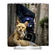 Red Cat With Green Eyes Shower Curtain