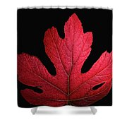 Red Leaf Art Shower Curtain