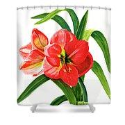 Red Orange Amaryllis Square Design Shower Curtain