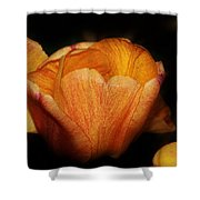 Red Orange Yellow Tulip Shower Curtain