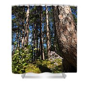 Red Pine Itasca Shower Curtain