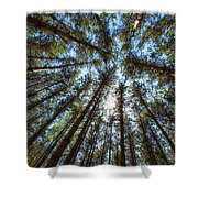 Red Pines 1 Shower Curtain