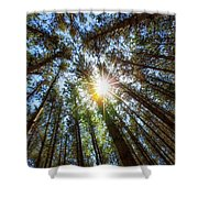 Red Pines 2 Shower Curtain