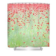 Red Poppies In A Meadow Shower Curtain