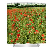 Red Poppies Meadow Shower Curtain