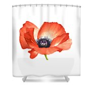 Red Poppy Flower, Image For Prints On Tshirt Shower Curtain