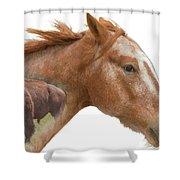 Red Rider Shower Curtain