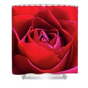 Red Rose 3 Shower Curtain
