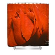 Red Rose Special Shower Curtain