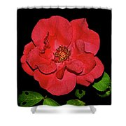 Red Rose With Dewdrops 038 Shower Curtain