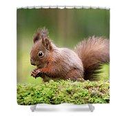 Red Squirrel Sciurus Vulgaris Shower Curtain