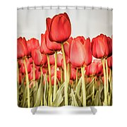 Red Tulip Field In Portrait Format. Shower Curtain