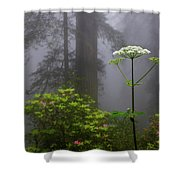 Redwoods By Crescent City 1 Shower Curtain
