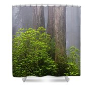 Redwoods By Crescent City 7 Shower Curtain