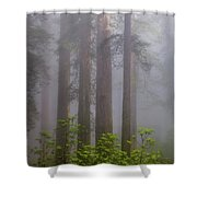 Redwoods By Crescent City 8 Shower Curtain