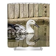 Rescue Runner Shower Curtain by Kate Brown