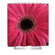 Rhapsody In Pink - Gerbera Daisy Shower Curtain