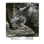 Rhino Standing In The Shade On A Summer Day Shower Curtain