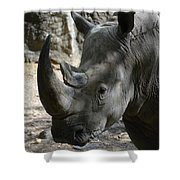 Rhinoceros With Two Horns Up Close And Personal Shower Curtain