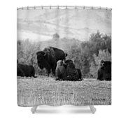 Rocky Mountain Bison Shower Curtain