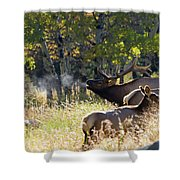 Rocky Mountain Bull Elk Bugeling Shower Curtain by Nathan Bush