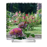 Rome Rose Garden Shower Curtain
