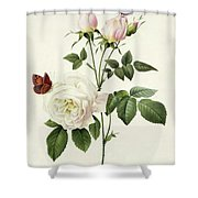 Rosa Bengale The Hymenes By Redoute Shower Curtain