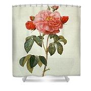 Rose La Duchesse Dorleans Shower Curtain