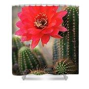 Rose Quartz Cactus Flower  Shower Curtain