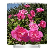 Roses Up To The Sky Shower Curtain by Arik Baltinester