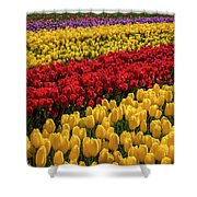 Row After Row After Row Of Tulips Shower Curtain
