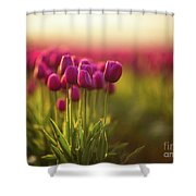 Rows Of Magenta Painterly Tulips Shower Curtain