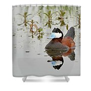 Ruddy Duck, Plumas County California Shower Curtain