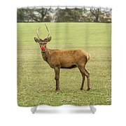 Rudolph The Red Nosed Reindeer Shower Curtain