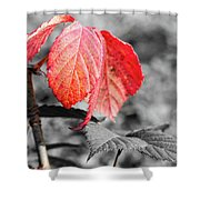 Rusty Leaves Shower Curtain